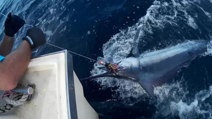 Durban Marlin Fishing